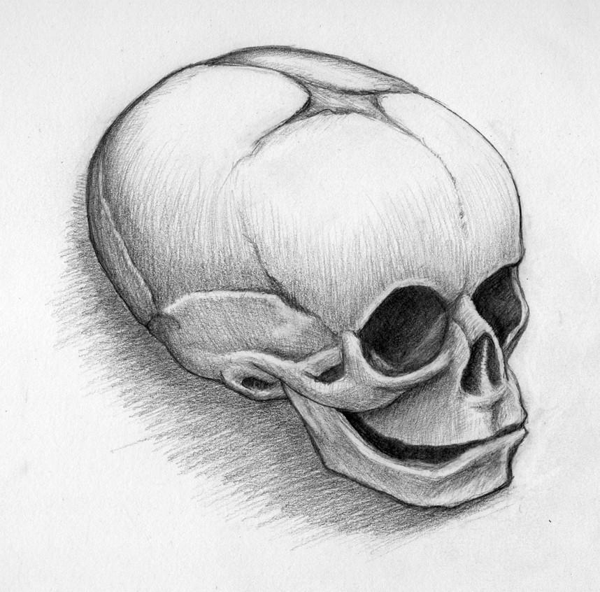 30 week old fetal skull sketch 2 | 2016, graphite on paper | Flickr