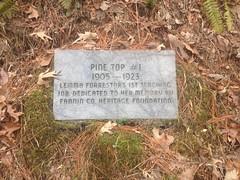 Pine Top #1