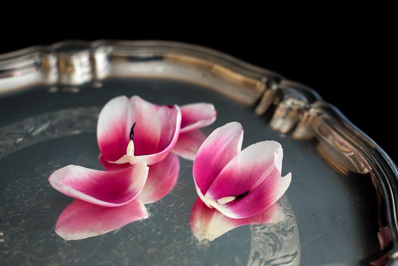 matognatur tulipaner01