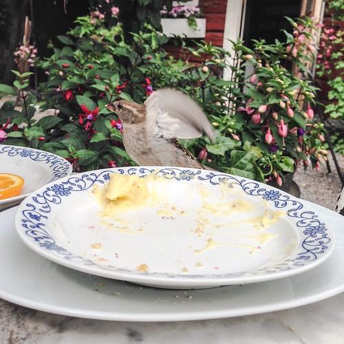 little bird rascals, cafe tant brun, sigtuna, sweden, june 17, 2015