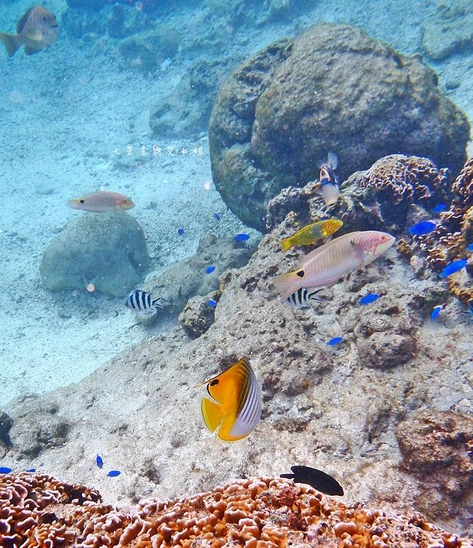 35 沖繩自由行 水上活動 香蕉船 Marine Support TIDE 殘波 藍洞海洋觀光 藍洞浮潛&珊瑚礁 餵食熱帶魚浮潛