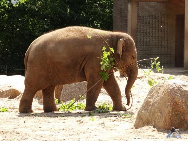 Zoo Berlin 12.06.2015   5