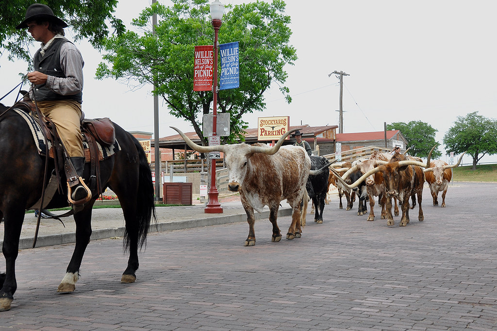 Fort Worth Longhorn Cattle Drive Take It Easy Now No
