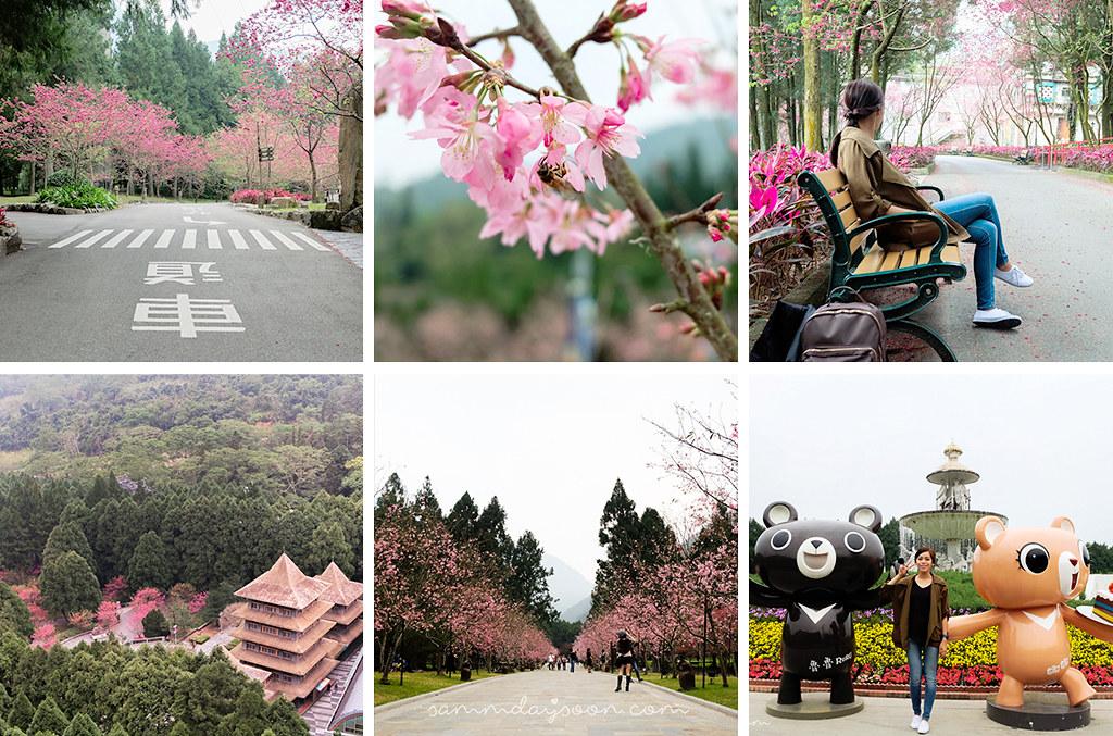 taiwan-cherry-blossom-instagram