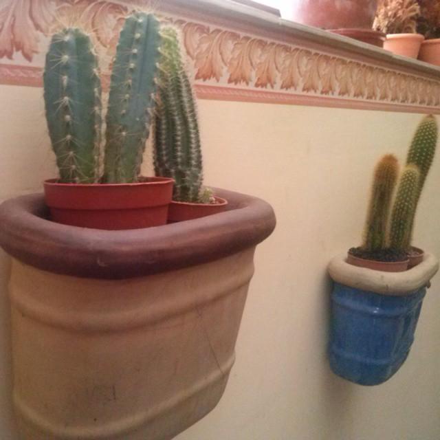 Vasi A Muro.Vasi A Muro Vaso Cactus Piantegrasse Avezzano Flickr