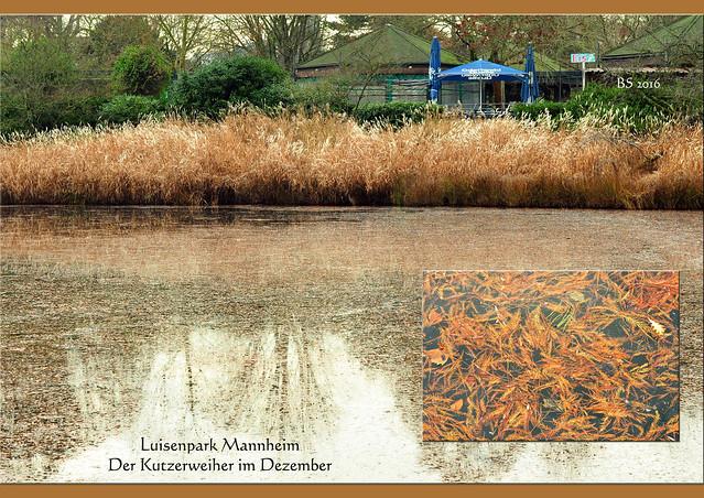 28. Dezember 2016 ... Luisenpark Mannheim ... lebende Krippe, Krippenspiel, Pflanzenschauhaus, Störche, Storchennest, Rabenkrähe, chinesisches Teehaus, Eichhörnchen, Bauernhof, Bauernhoftiere, Ziege, Schwein, Kuh, Kaninchen ... Botanik, Pflanzen, Blumen, Sträucher ... Kutzer-Weihner ... Arzneimittelgarten, Rosmarin ... Schneeglöckchentage ... 200 Jahre Fahrrad - Drais ... Foto und Collagen: Brigitte Stolle Mannheim