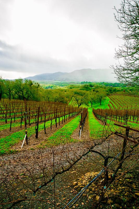 Sonoma Wine Tasting Tour, California wine country, vineyards in Sonoma