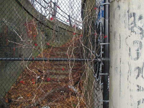 Stairway behind fence with berries, Annette and Dundas West #toronto #junctionto #annettestreet #dundasstreetwest #dupontstreet #stairs #staircase