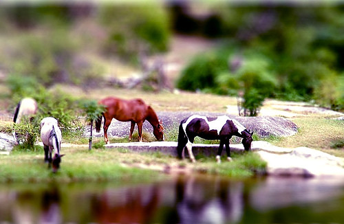 4 horses - tiltshift technique | by Kris Kros