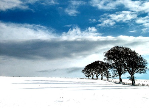 Trees Snow and Shadows | by ccgd