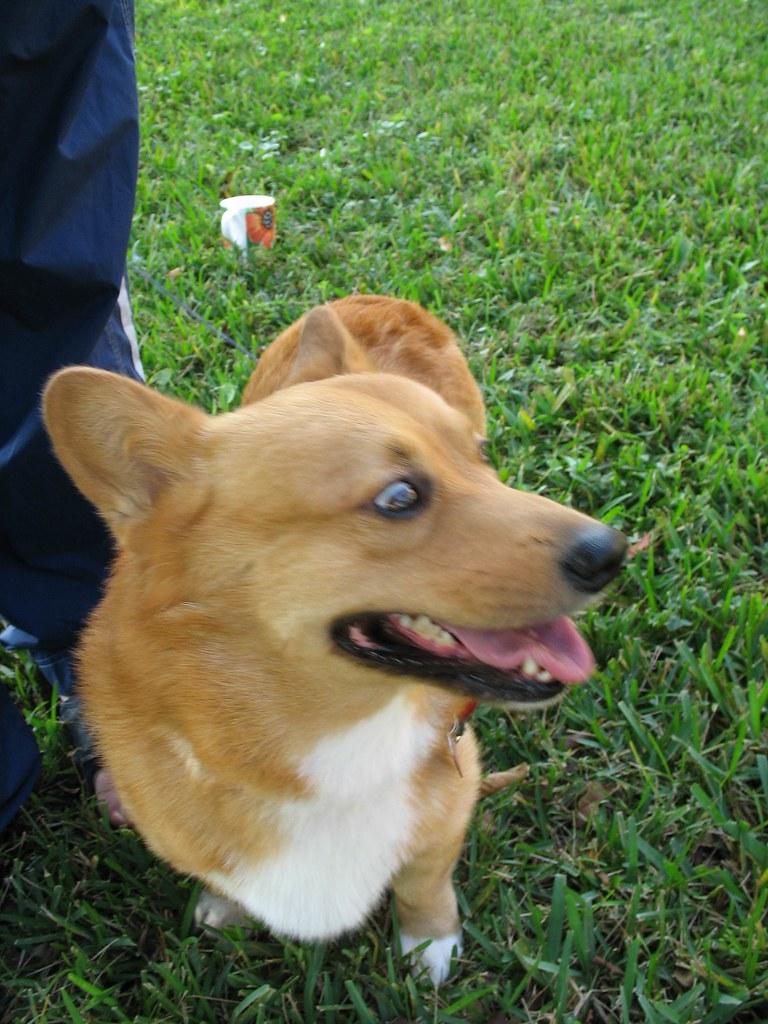 Buddy Dog Adoption Fees