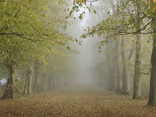 Misty avenue | by allispossible.org.uk