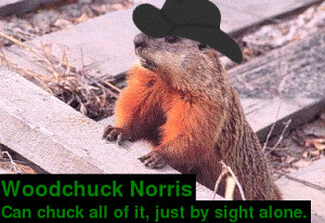 Woodchuck Norris | How much wood would a woodchuck chuck ...