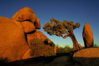 Joshua Tree National Park | by Dietmar Temps