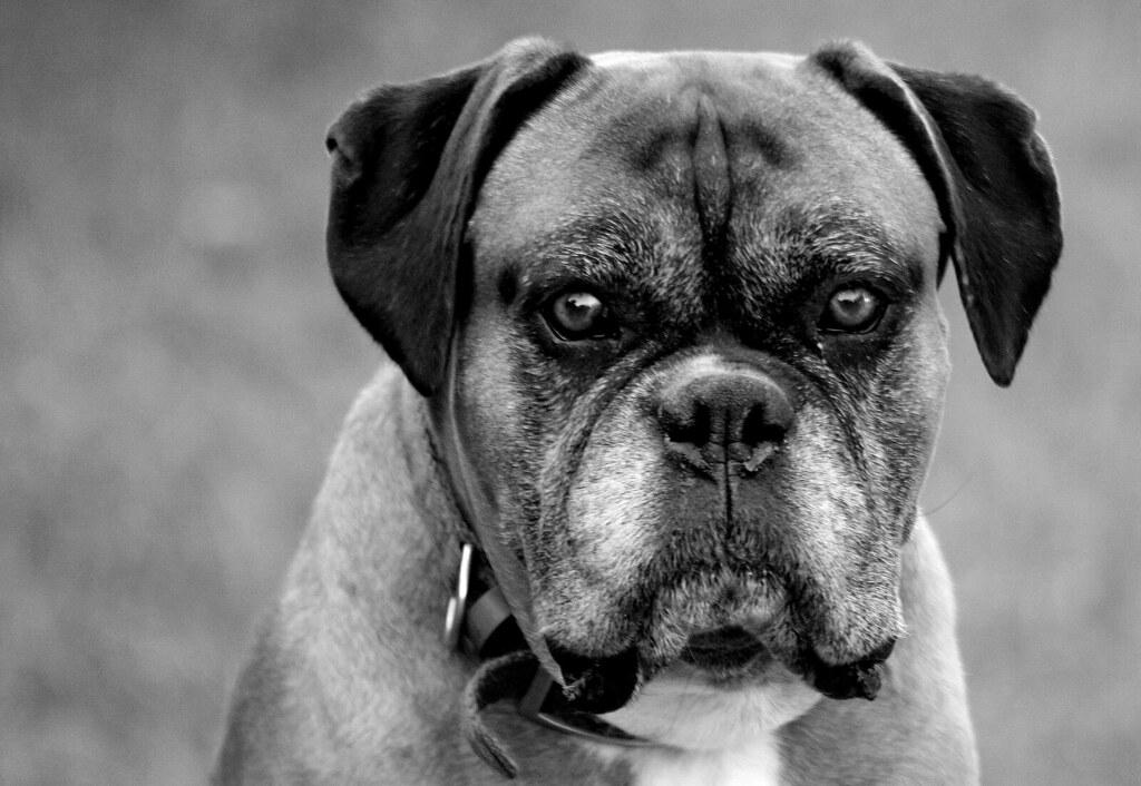 Dog Old Wont Stop Panting Won T Eat