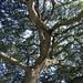 Dinosaur Museum Tree