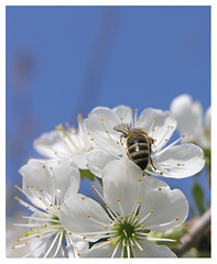 Bee collectiing 4 | by Romeodesign