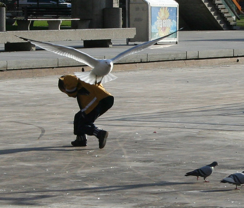 Giant Seagul Attacks Boy | by nothingboy