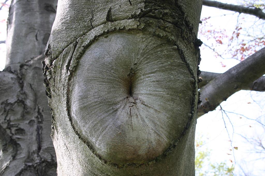 Nip tuck boobs butt