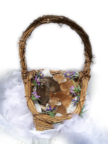 Basket of bunnies | by Oh Joy!