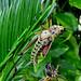 Grasshopper - New Skin
