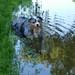 bran soaking