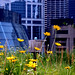 rooftop garden, city hall, chicago (II)