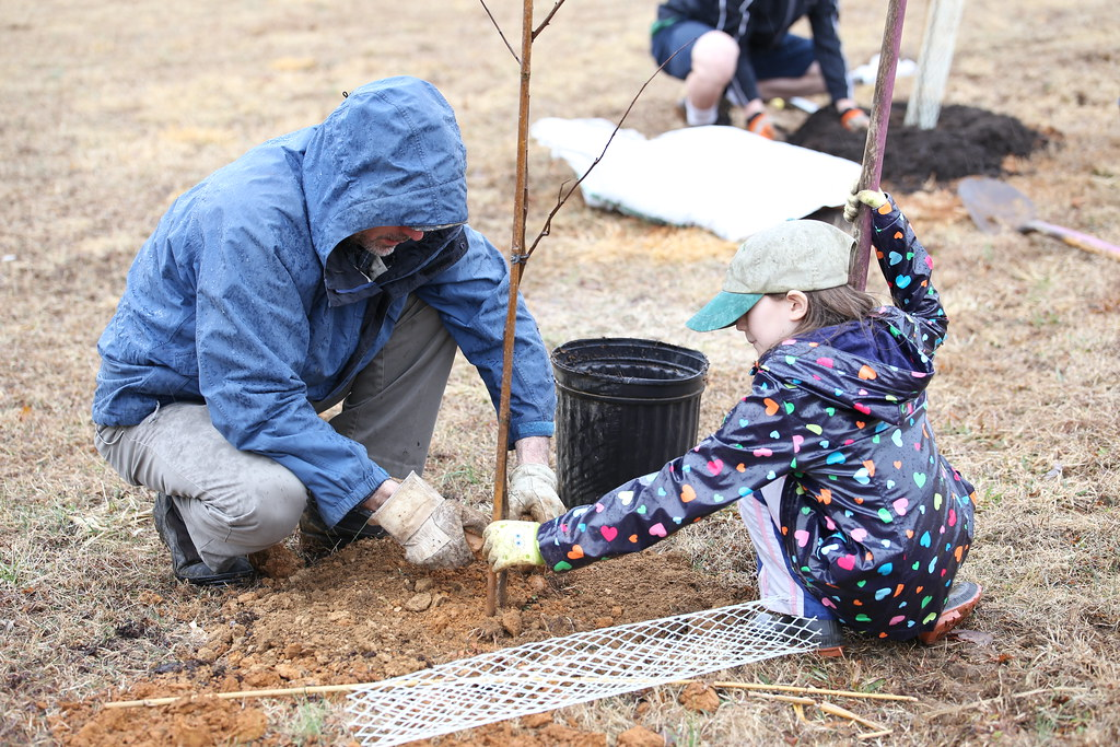 Photo of people planting a tree