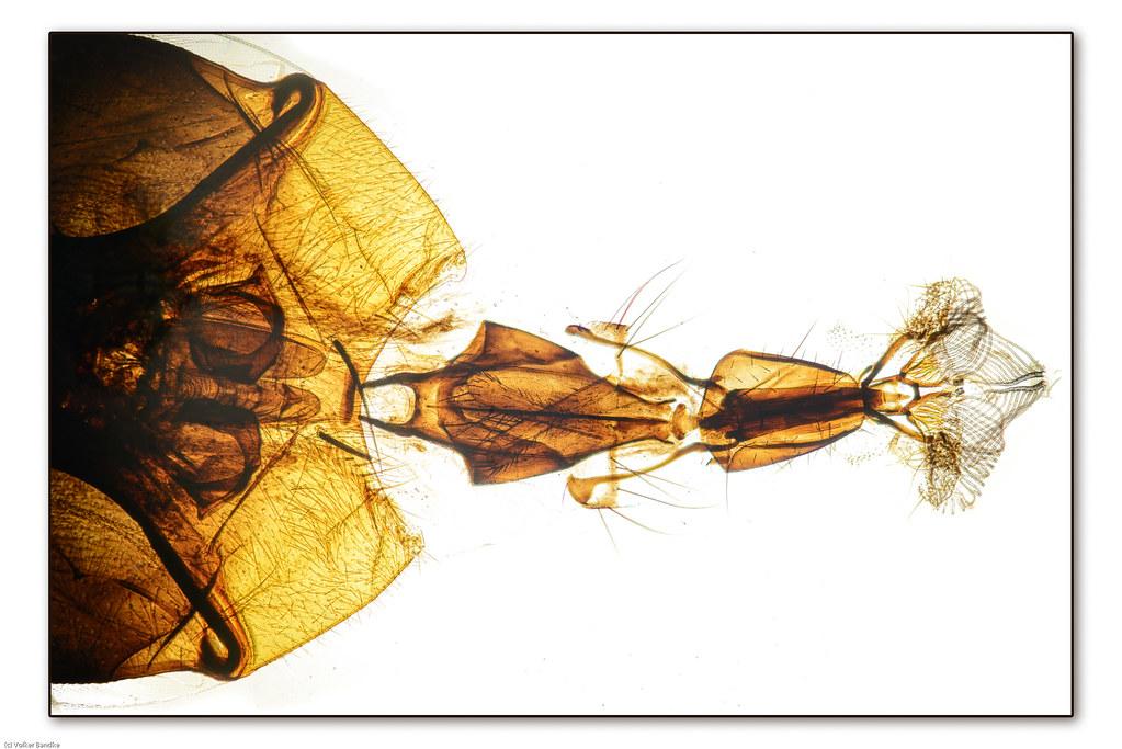 Mundwerkzeuge der Fliege | Durchlicht 40x | Volker Bandke | Flickr