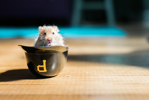 Littlest Bucco fan.