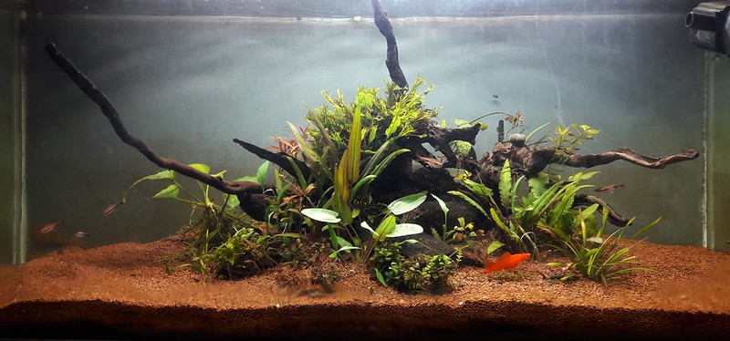 My Aquascape With Dirt Substrate