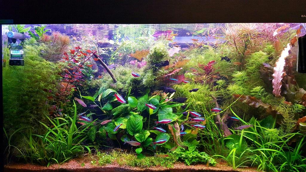 Как сделать аквариумное хозяйство фото 913