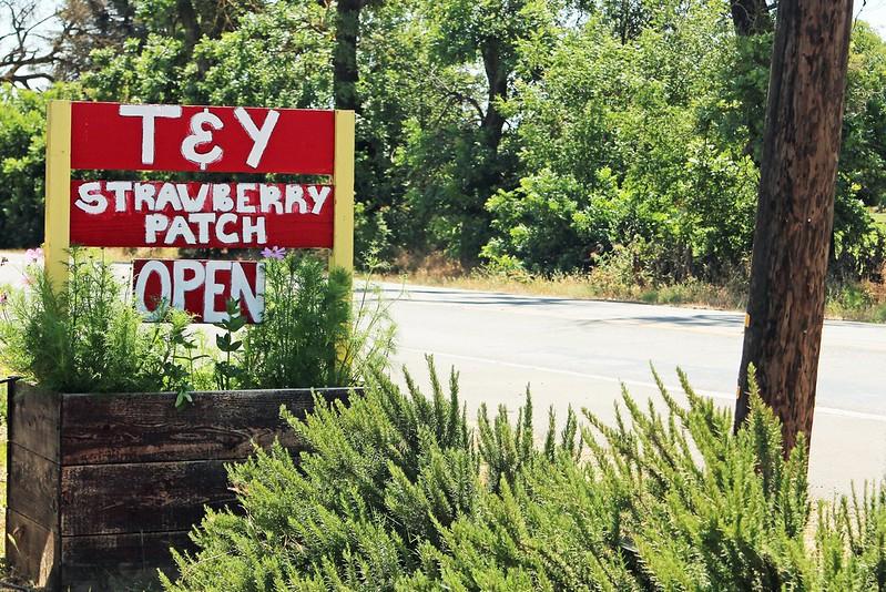 T & Y Strawberry Farm