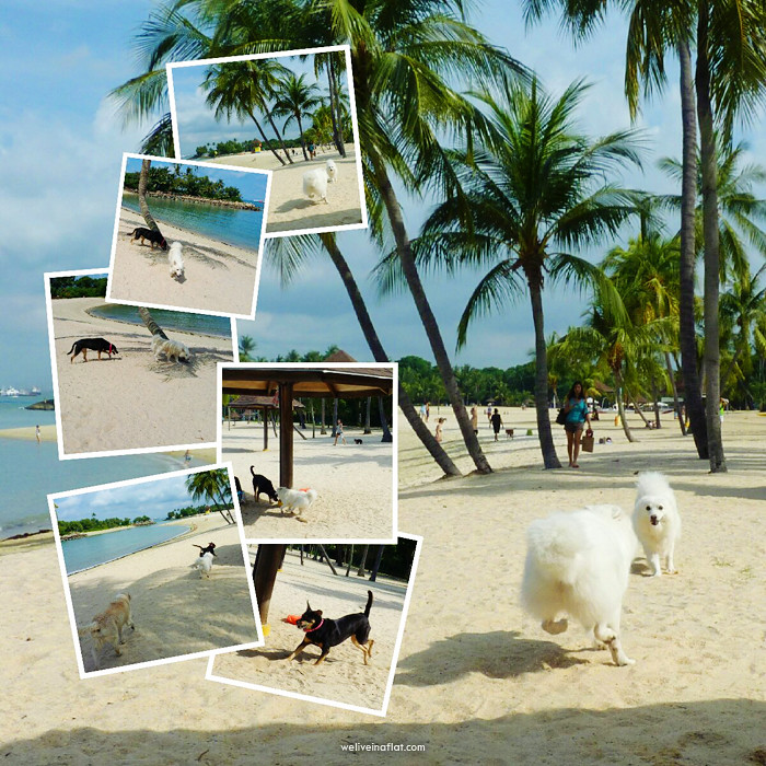 tanjung-beach-dog-collage