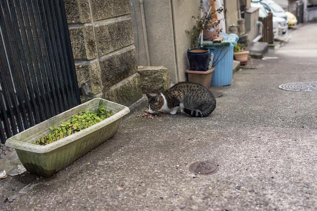 鵯越のネコ。餌をもらっている