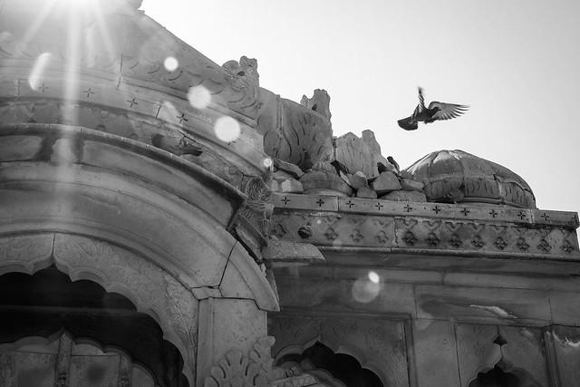Pigeons in Bada Bagh, Jaisalmer, India ジャイサルメール バダ・バーグの鳩