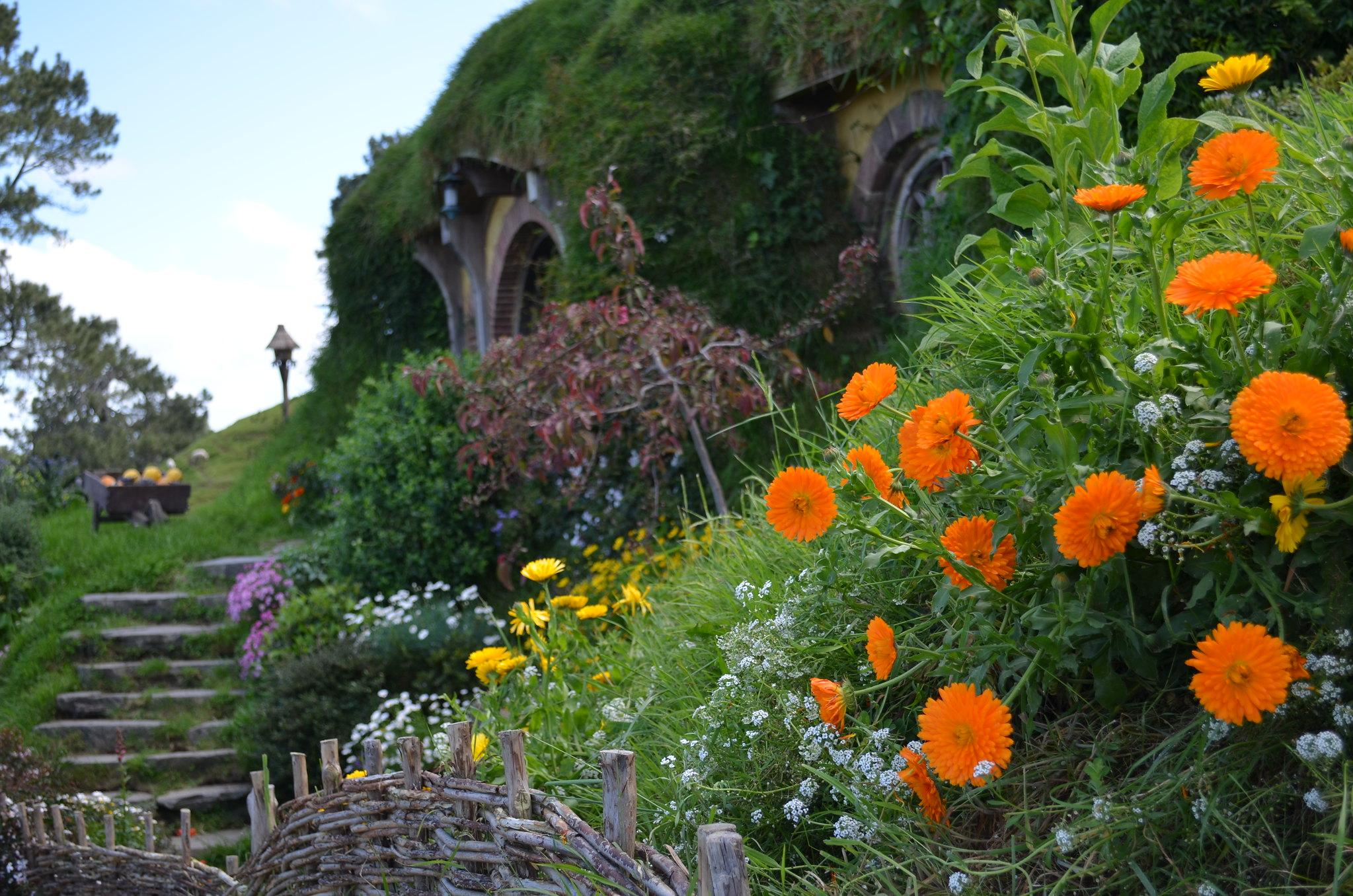 Hobbiton - marigolds