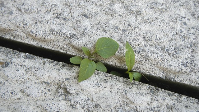 Weed War Update 2