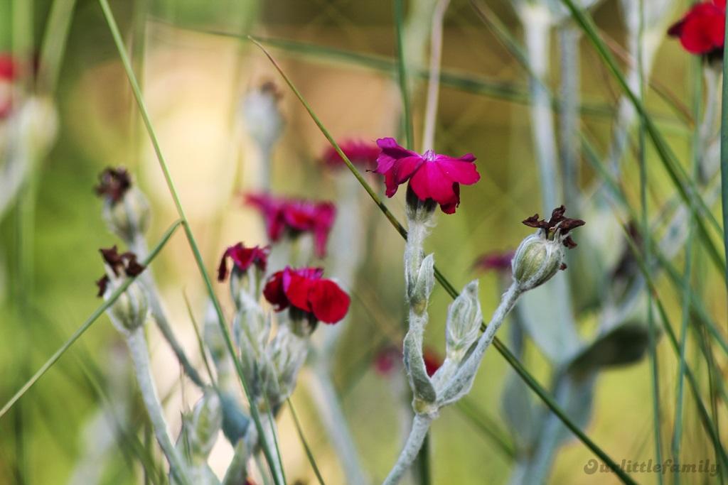mon jardin 14
