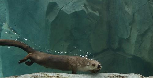 Under Water River Otte...