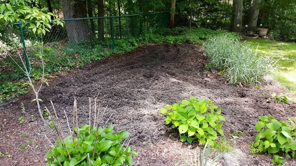 newly rototilled garden - 2015-06-05