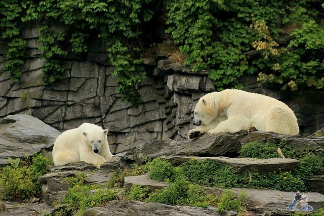 Tierpark Berlin 24.06.2014  83