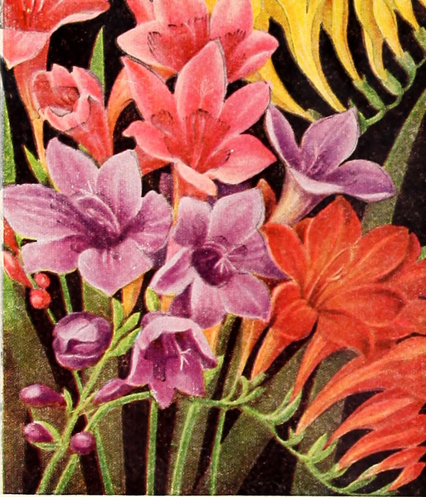 Image From Page 9 Of Bulbs Plants Seeds For Autumn Planti Flickr