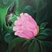 Rosa de Bayahibe - Julio Reyes - pintura acrílica tela 70x100 - 2017