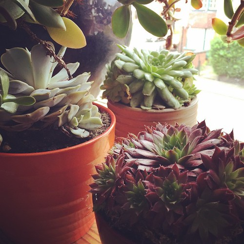 Some of my little beauties. #plants #succulents #houseplants #peaceful | by bad bad magpie