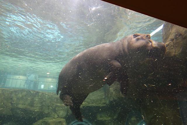 2015夏の旭山動物園_20