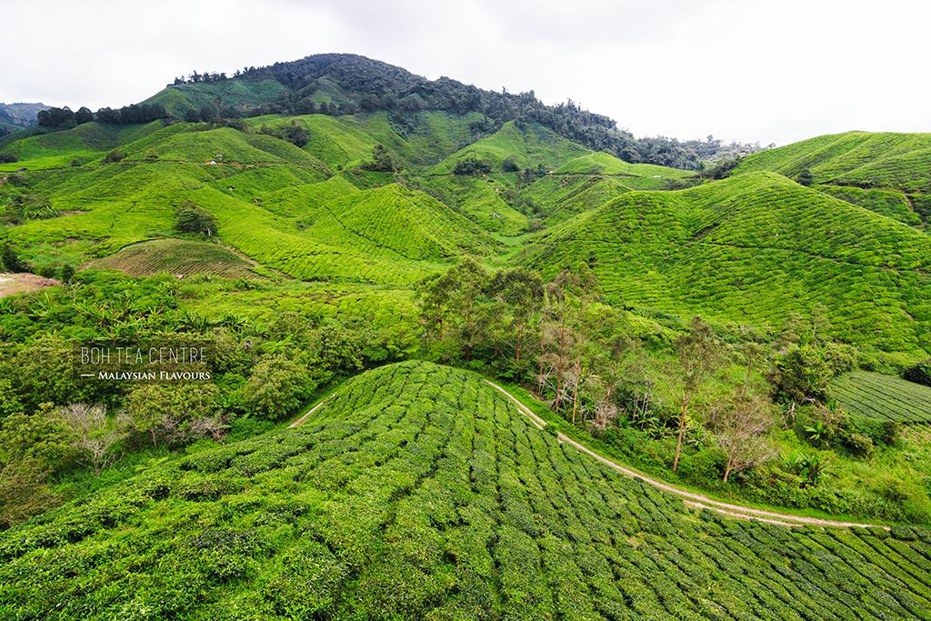 Boh Tea Centre Sungai Palas Cameron Highlands Malaysian Flavours