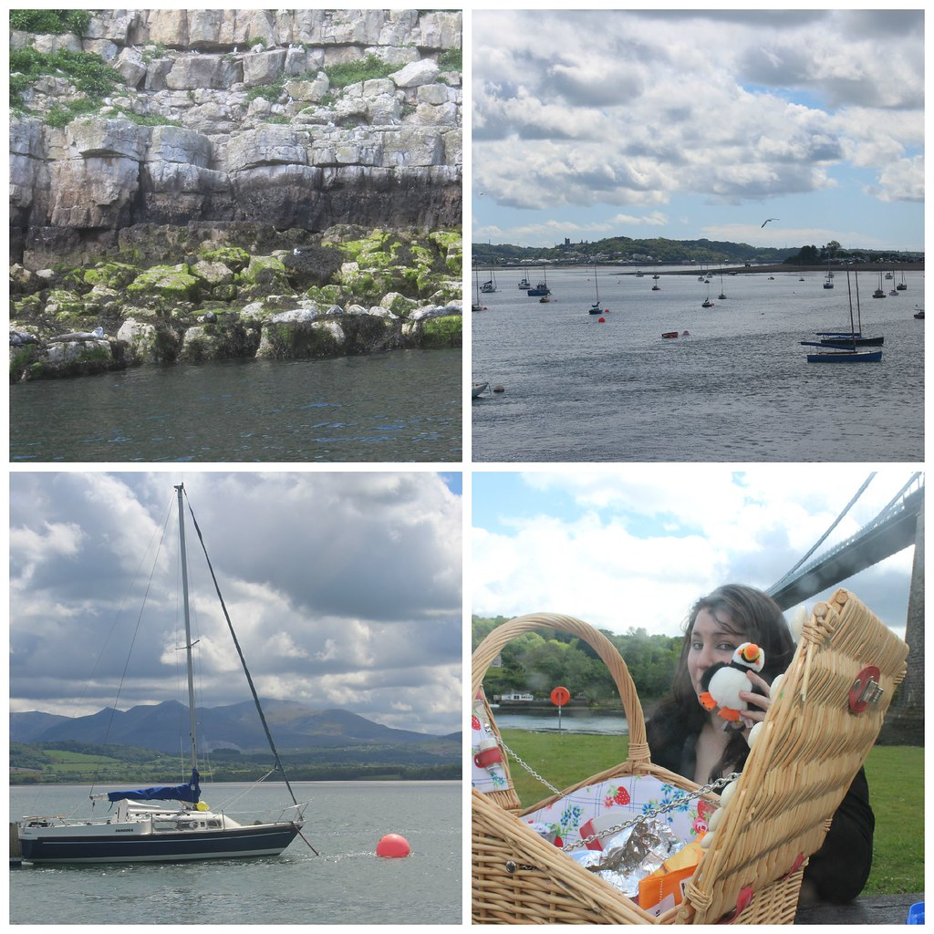 Puffin Island 2 Collage