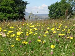 Lower Winskill meadow