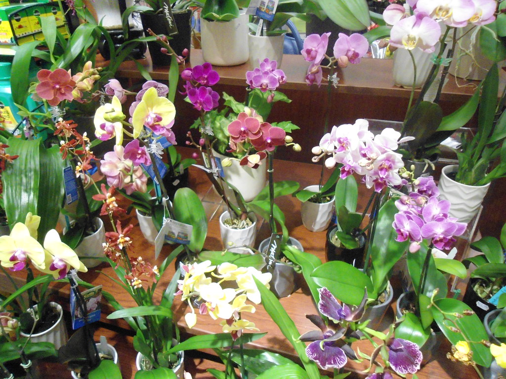 Ralphs Market Flowers And Orchids In Palm Springs Ca Flickr